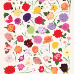 Art Prints of Arrangements of Peonies, Roses, Tulips, & Sunflowers Featuring 50 Types of Their Respective Flowers