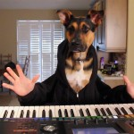 A Dog Named Bella Performs a Waltz on the Piano With the Help of Human Hands