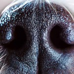 An Explanation of Why Dogs Sniff Each Other's Rear Ends