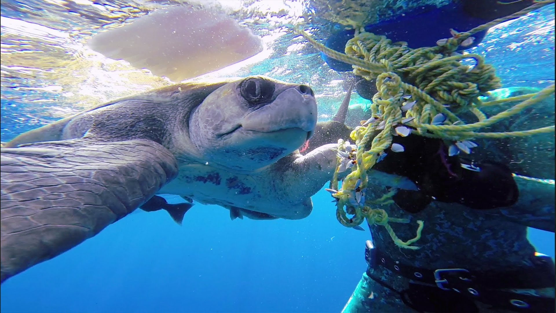 Diver Frees Trapped Sea Turtle Entangled In Rope and Gets A Big Thanks For His Kindness