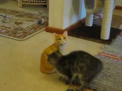 Frenzied Kitten Goes Into Full Offensive Mode Against a Semi-Realistic Looking Ceramic Cat