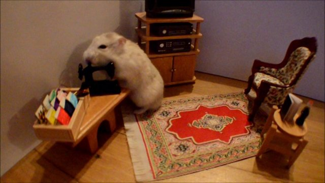 Hamster Wakes Up In a Dollhouse and Spends His Day Looking for Love