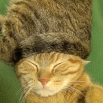 Kojiro the Kitty Wears a Furry Cat Tail Hat