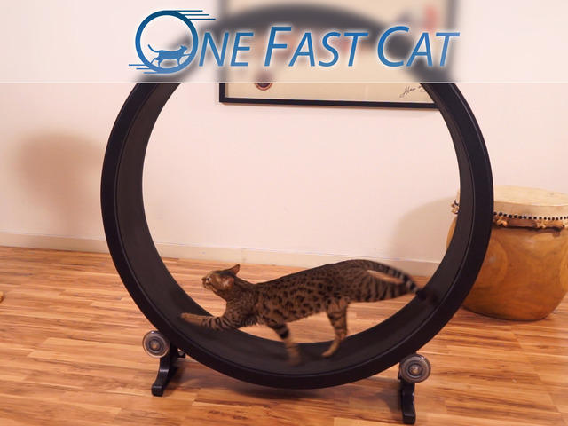 One Fast Cat, A Hamster Wheel-Like Exercise Treadmill for Cats