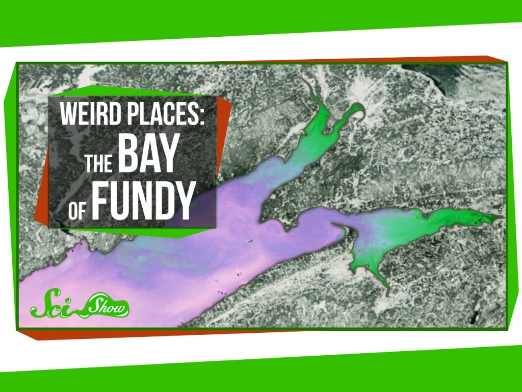SciShow Explores Canada's Bay of Fundy, A Body of Water With the Largest Tidal Range in the World