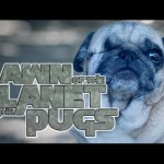 The 2014 Sci-Fi Action Film 'Dawn of the Planet of the Apes' Re-Enacted by Cute Little Baby Pugs
