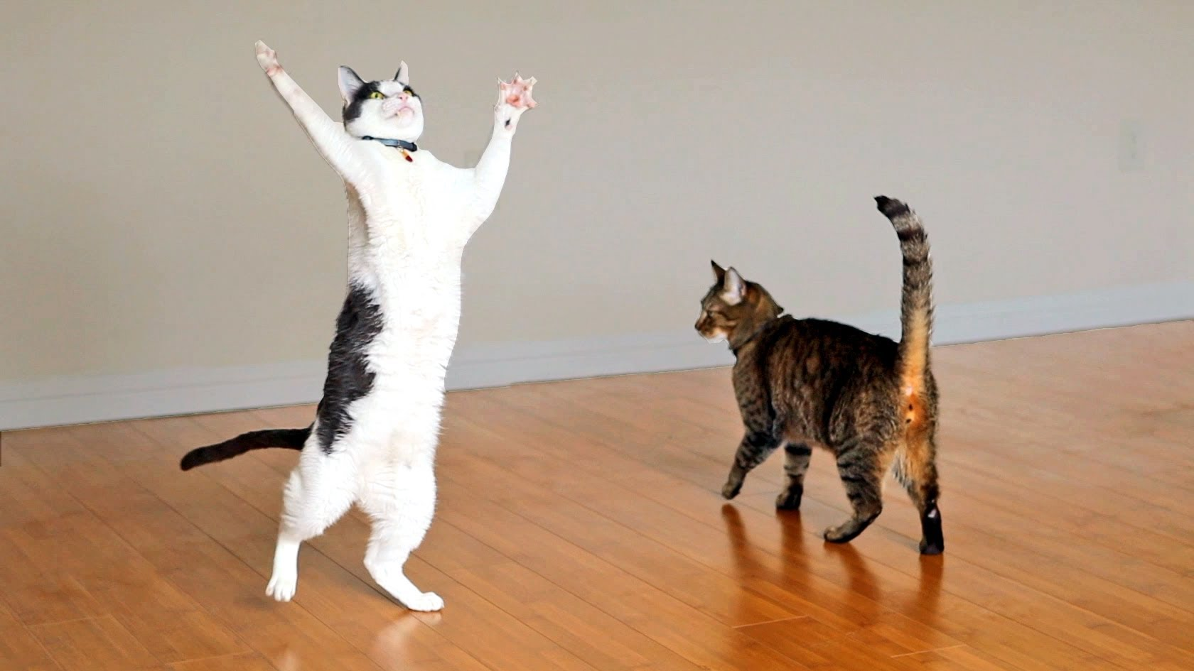 two incredibly excited cats play with a strand of yarn