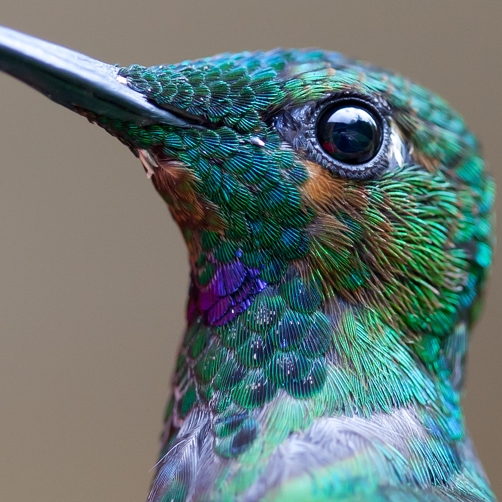 Gorgeous Macro Photos of Hummingbirds