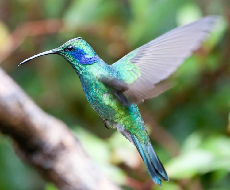 Hummingbird Macro Photos