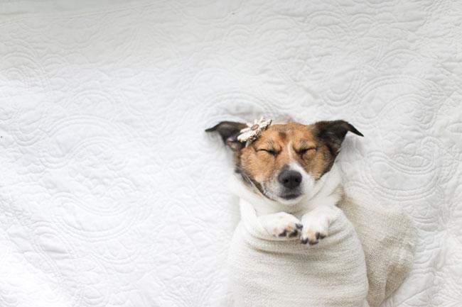 Doggy Newborn Photos by Jamie Clauss