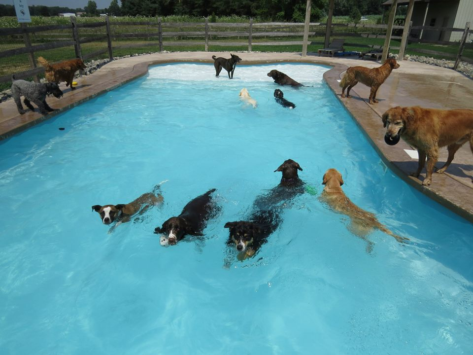 Doggy Daycare in Michigan Throws Pool Party for Their Adorable Canine Clients