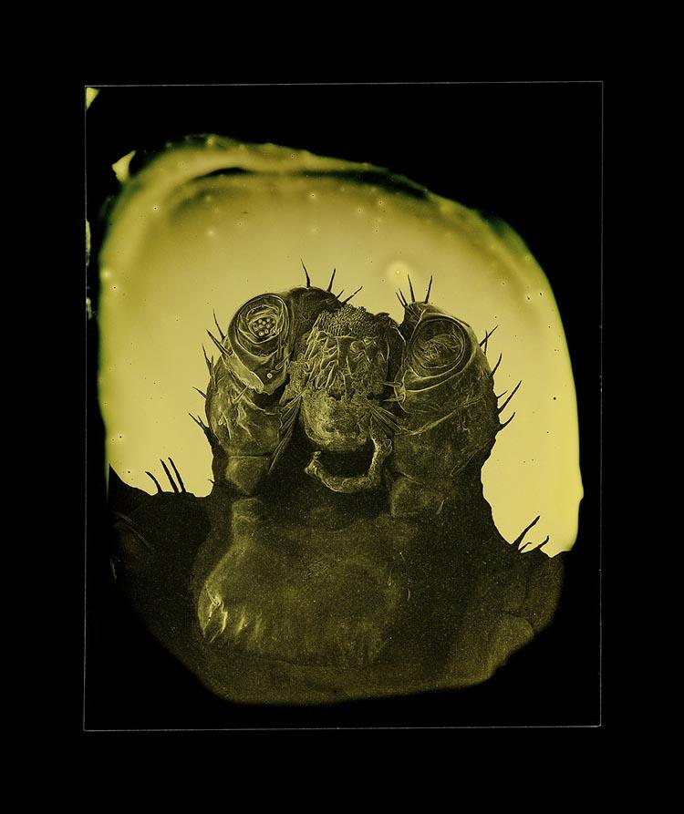 Parasite Tintypes by Marcus DeSieno