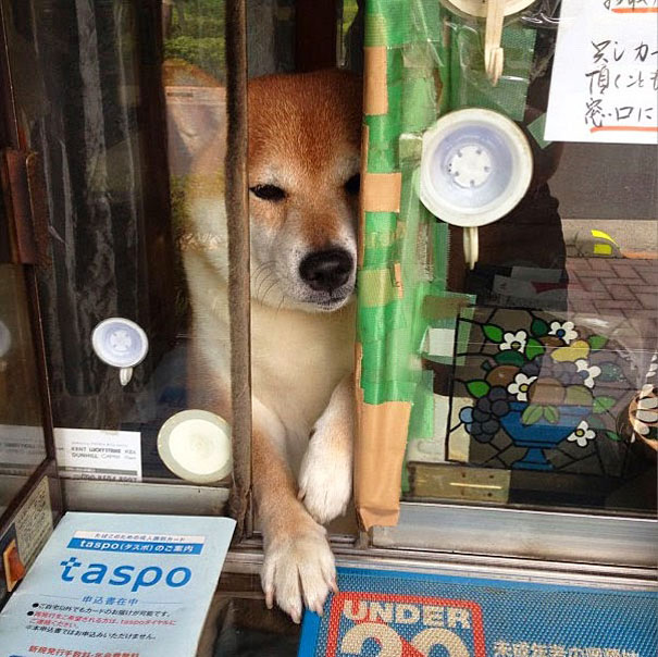 Shiba at Sliding Window