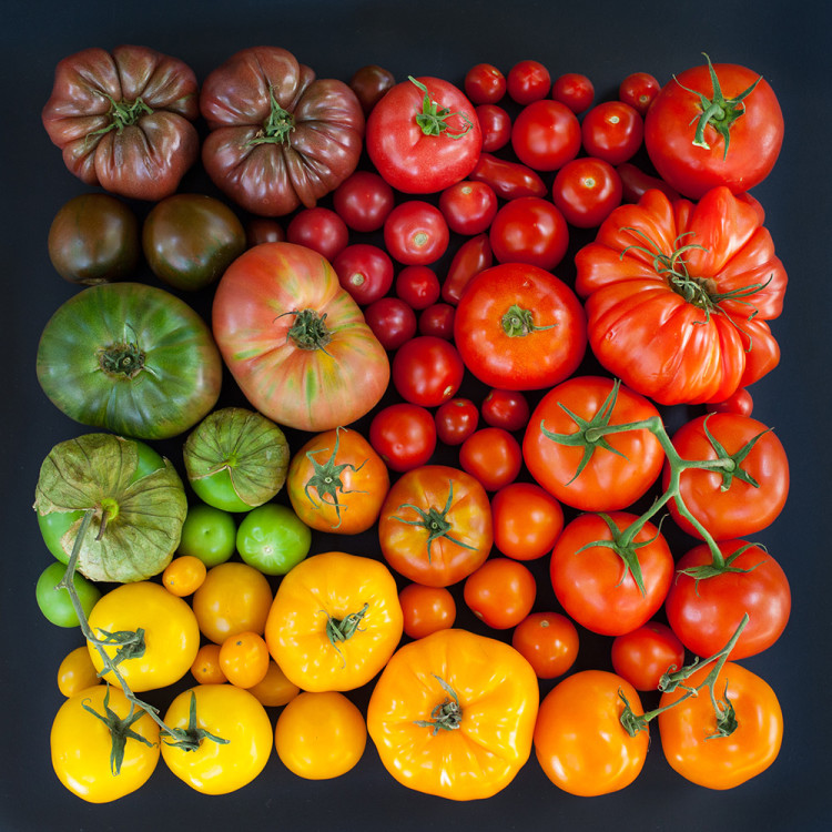 Beautiful Photos of Natural and Edible Objects Arranged Neatly by Color
