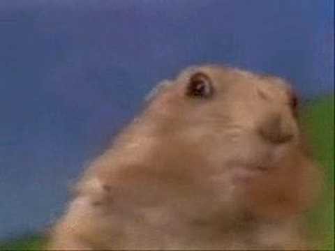 Dramatic Prairie Dog aka Dramatic Chipmunk