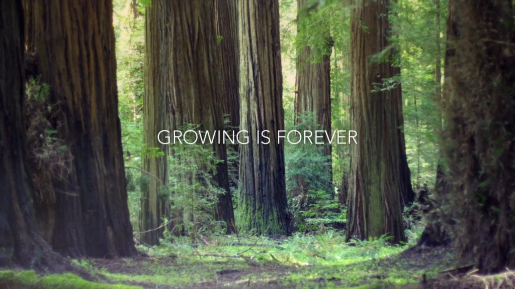 Growing is Forever, An Ode To The Redwoods