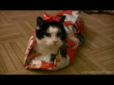 How To Gift Wrap A Cat For Christmas