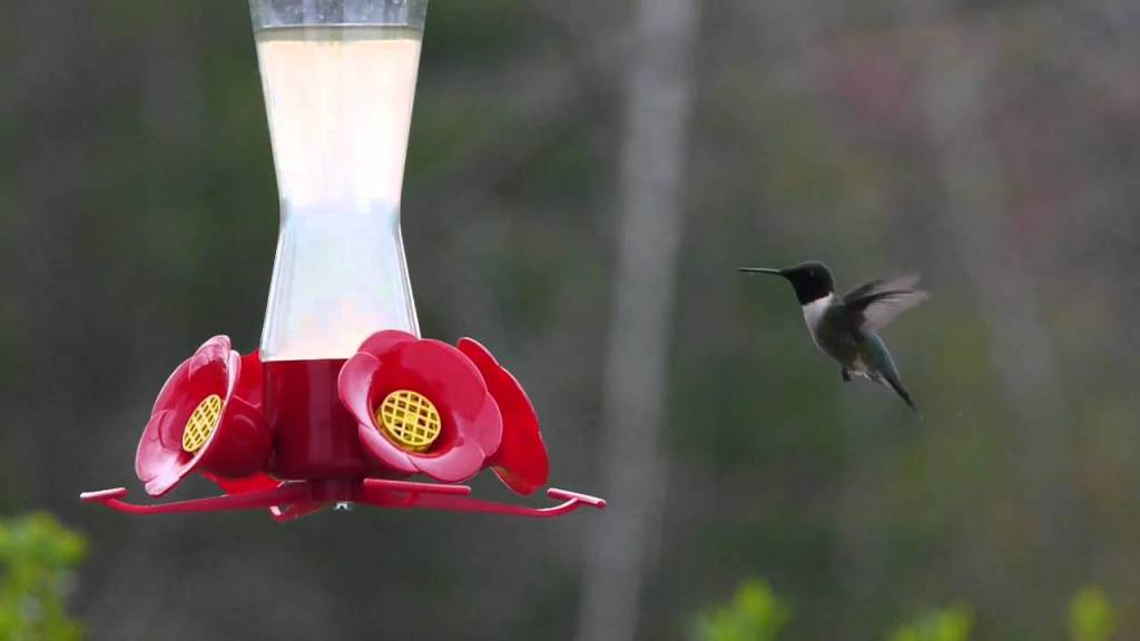 Hummingbird at 1/4 Speed