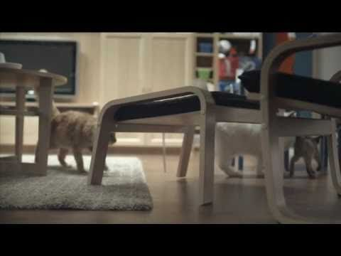 100 cats in ikea