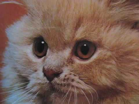 Kittens Inspired By Kittens, Narrated By An Imaginative 6 Year Old