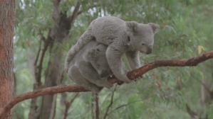 Marsupial Leapfrog