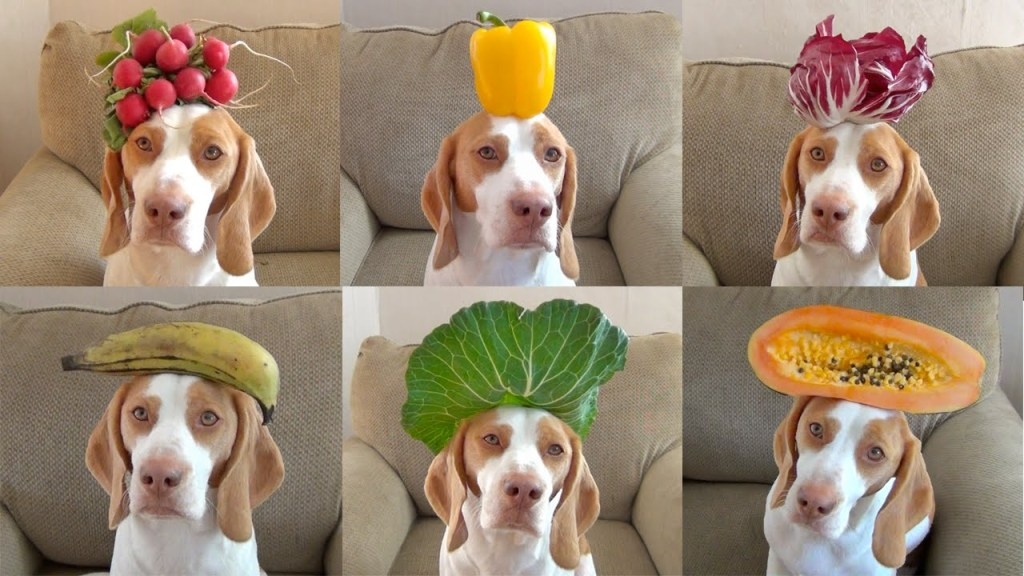 Maymo the Lemon Beagle Poses With 100 Different Fruits, Vegetables and Herbs on His Head