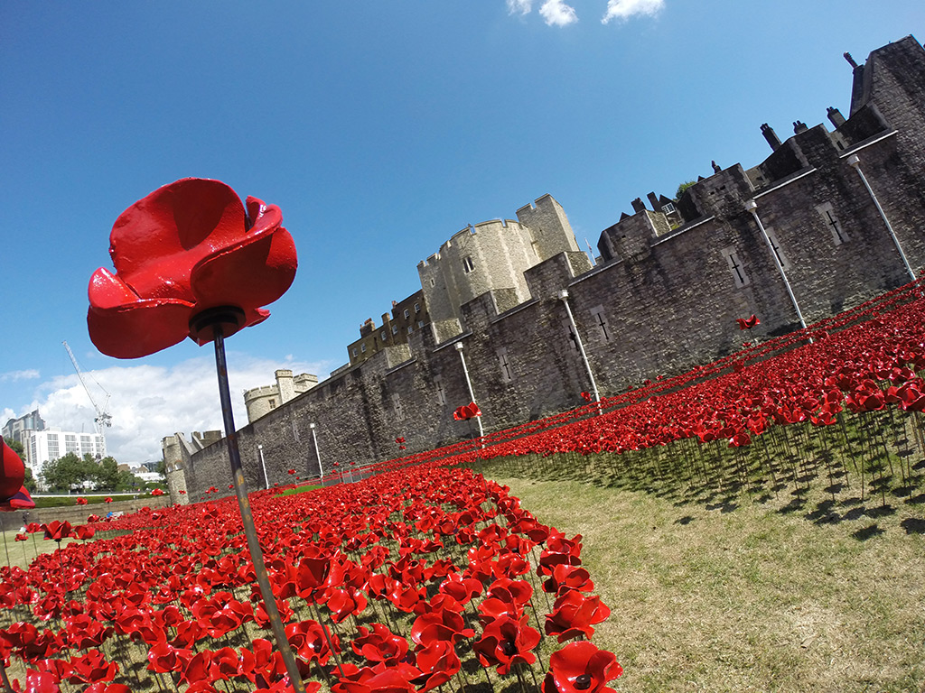 An Eerie Installation Of 888 246 Ceramic Poppies At The