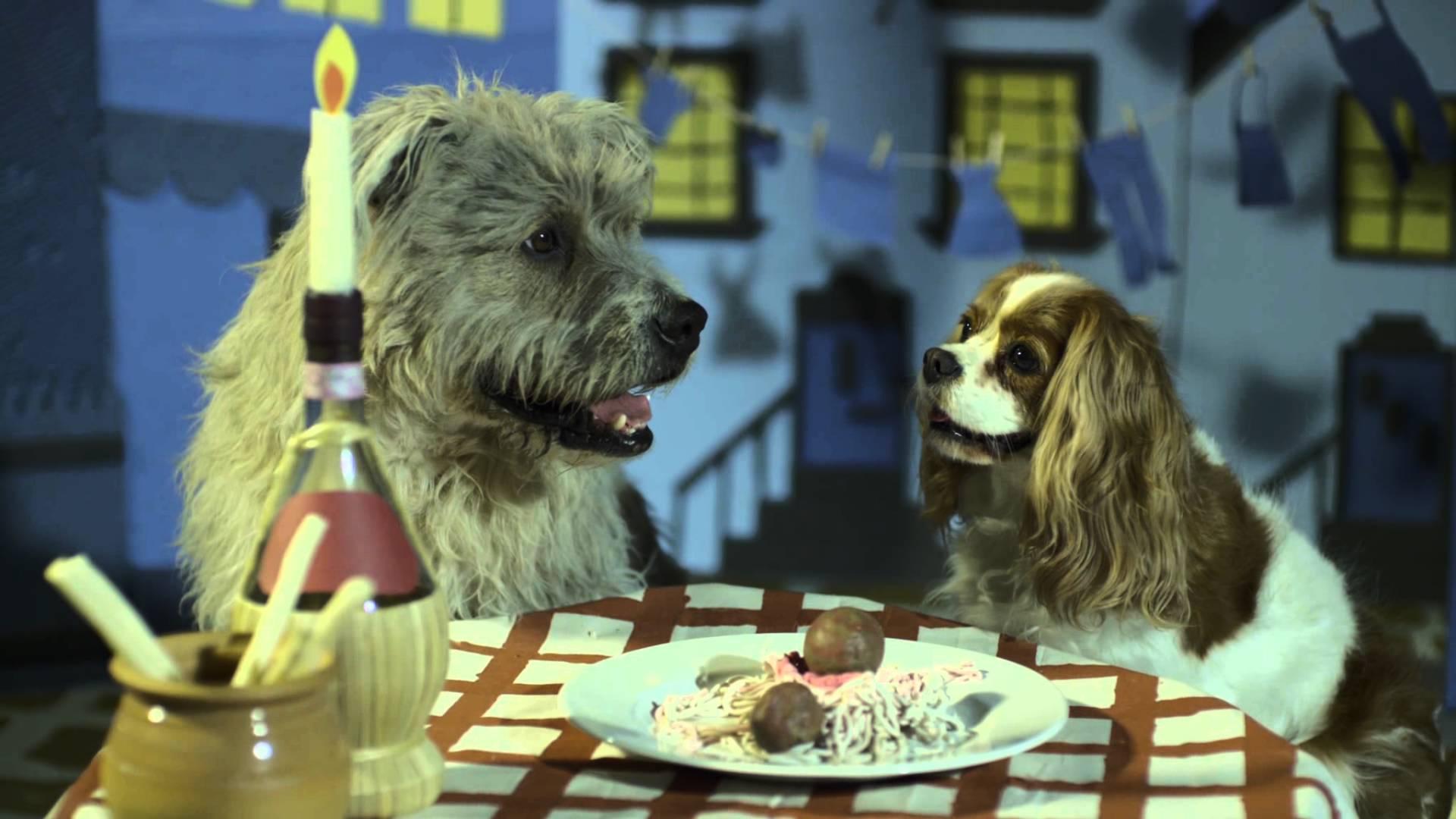 Dog Eating Spaghetti Kiss