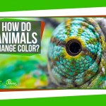 SciShow Explains How Different Species of Animals Are Able to Change Color