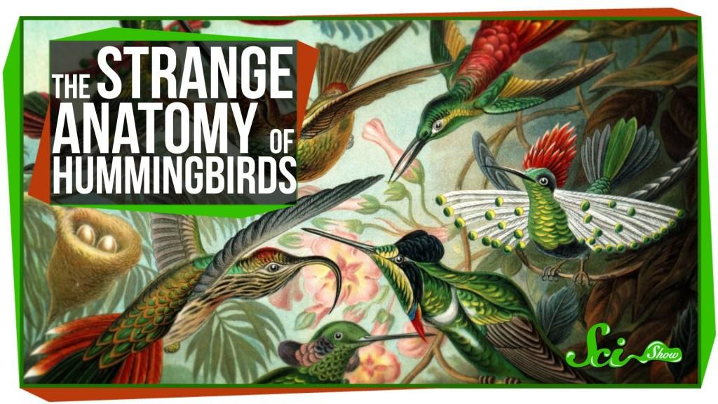SciShow Explains What Makes Hummingbirds So Unique