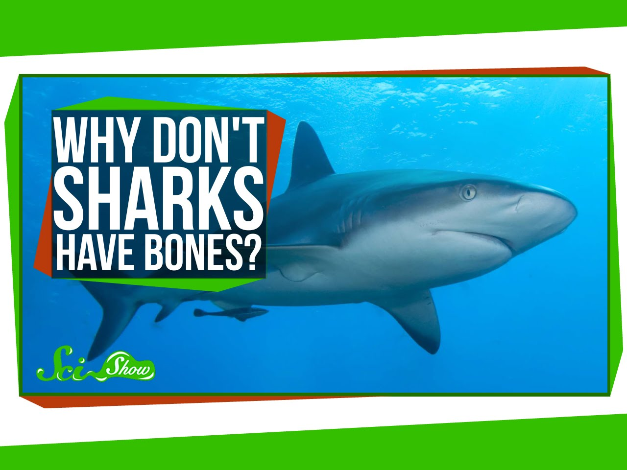 SciShow Explores the Fascinating Anatomy of Sharks and Explains Why ...