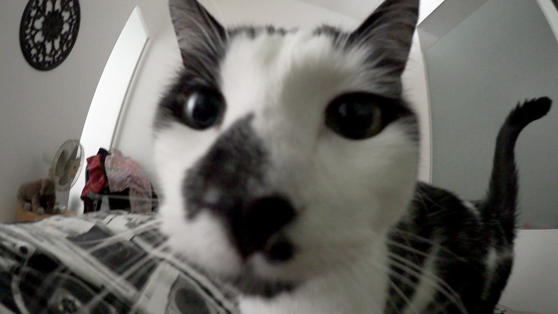 Up Close View of Being Woken Up by a Cat