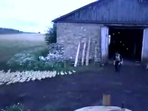 Video of a Russian Man Ordering Ducks Into Formation and Marching Them Into a Barn