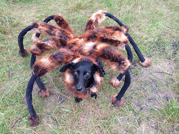 A Dog Dressed Up as a Giant Mutant Spider Terrifies People, Causing Them To Run for Their Lives