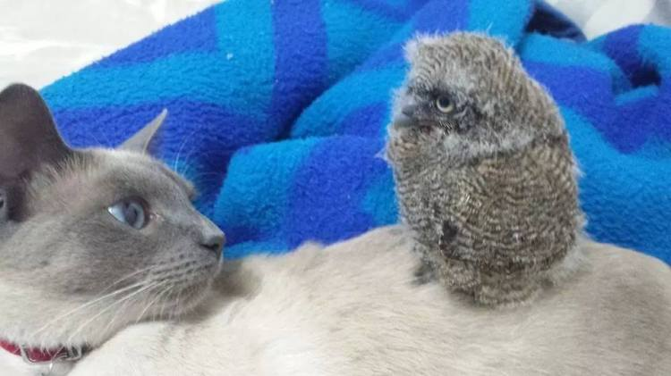 Baby Owl and Kitty
