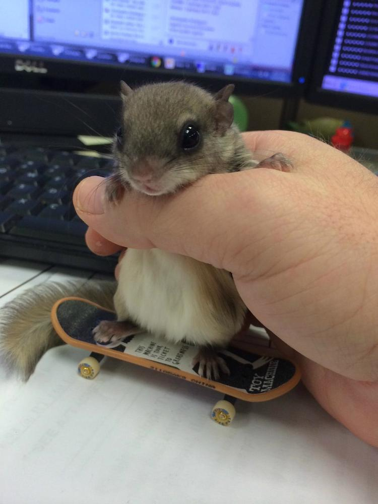 Biscuits on Skateboard