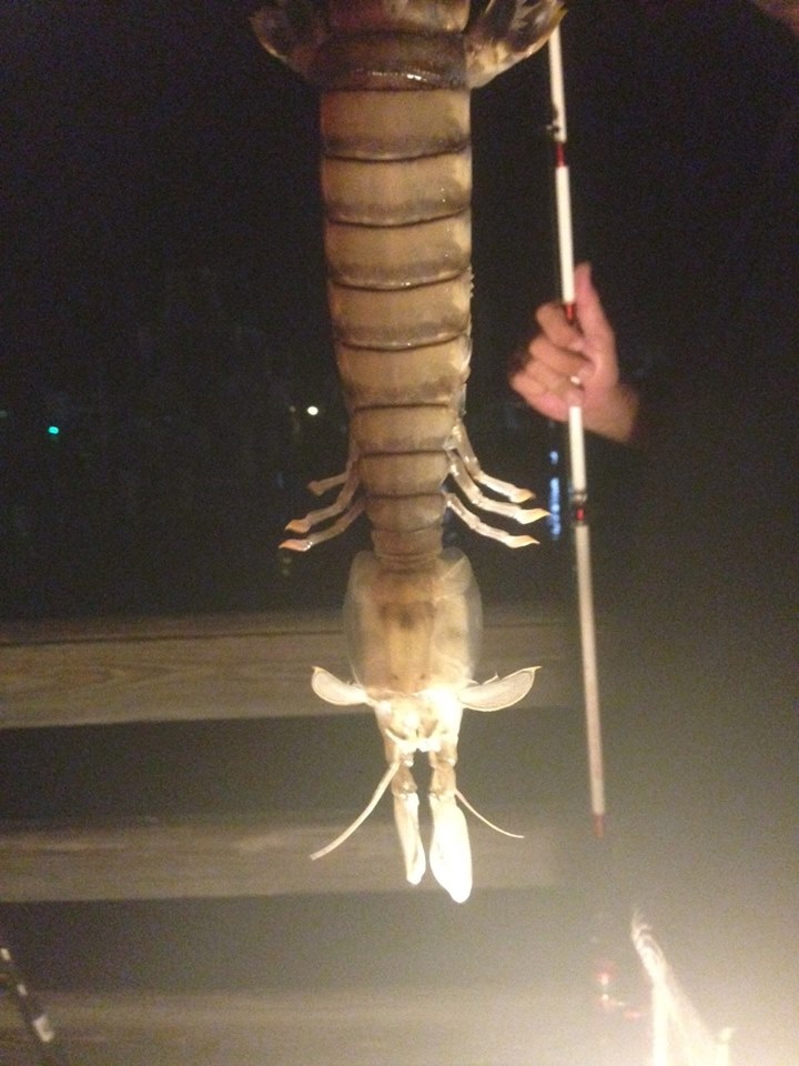 Giant Shrimp