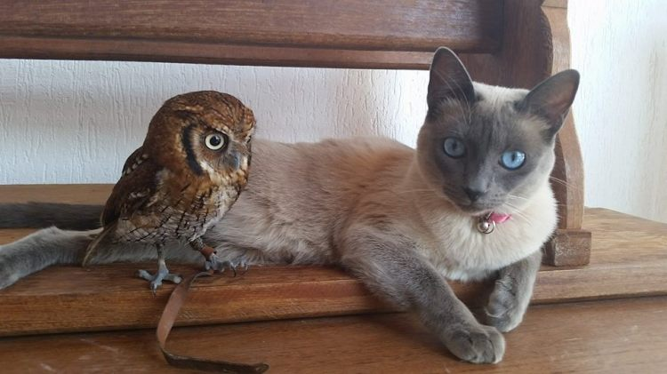 Grown Up Owl and Kitty