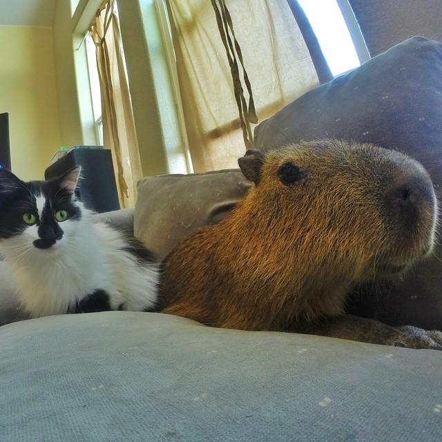 JoeJoe and Cat