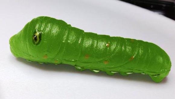 Larvae Candy 7