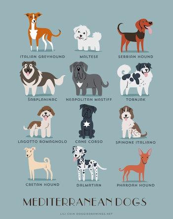 Mediterranen Dogs