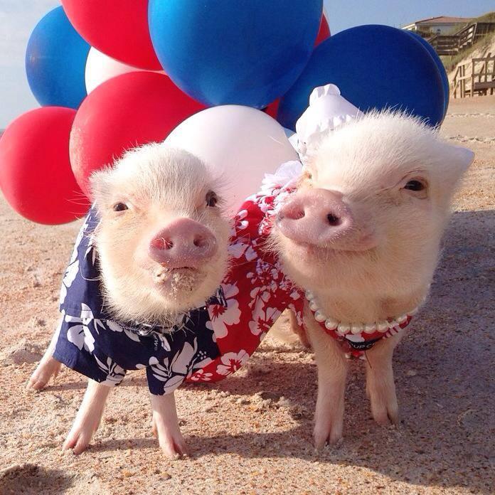 Priscilla and Poppy
