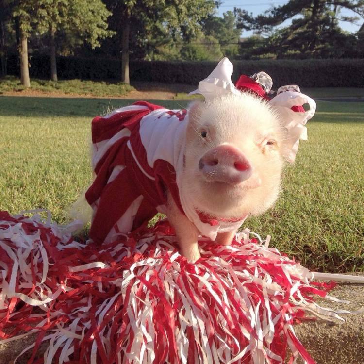 Priscilla the Cheerleader