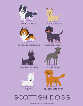 Scottish Dogs