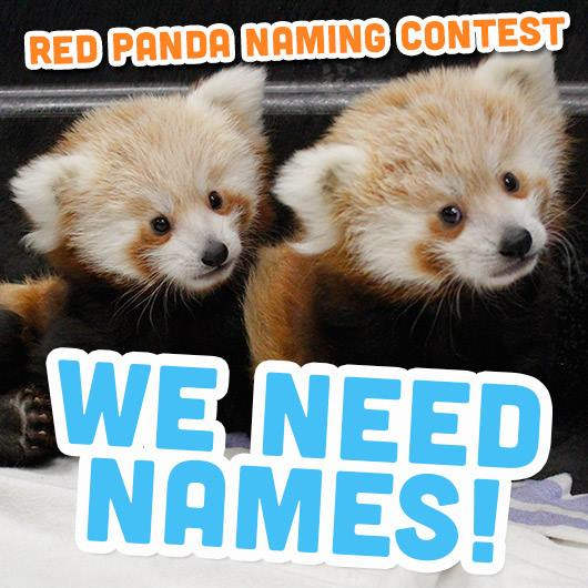 We Need Names
