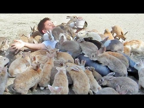 A Man Willingly Lets a Herd of Friendly 'Rabbit Island' Bunnies Overtake Him During Mealtime