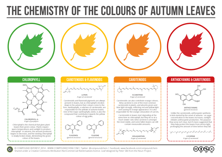 Color of Autumn Leaves Explained