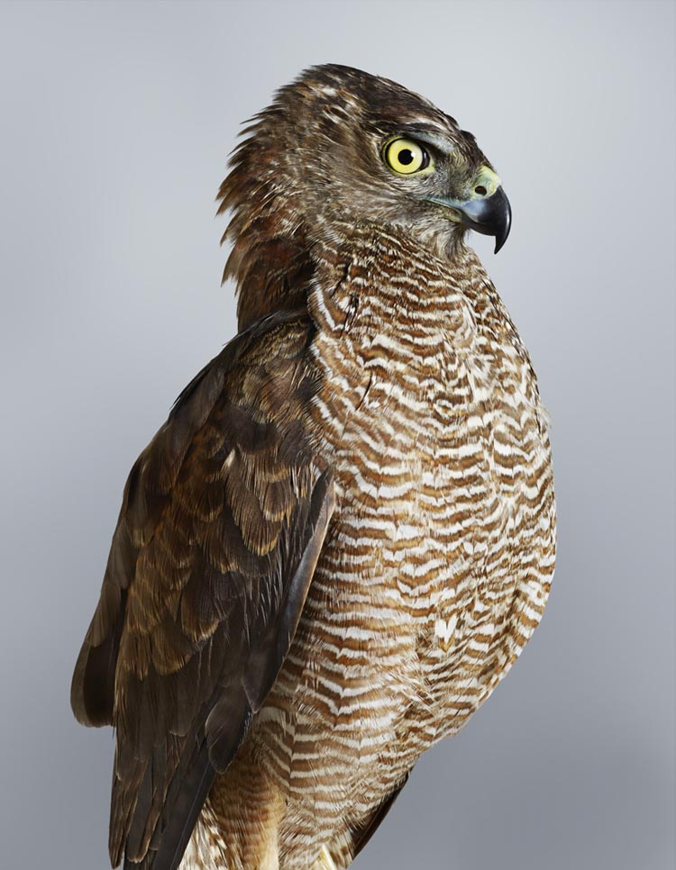 Beautifully Detailed Photographic Portraits of Birds by Leila Jeffreys