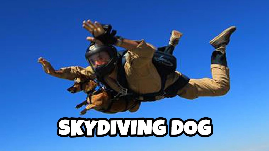Daring Dachshund Goes on First Skydiving Trip Strapped to His Adventurous Human