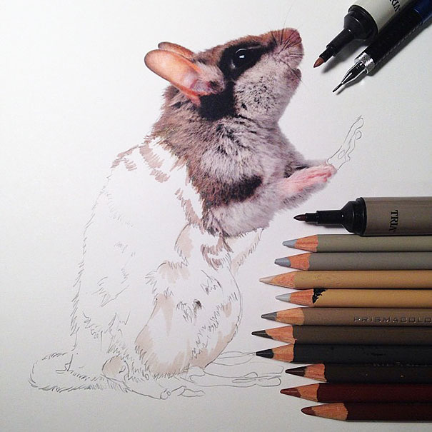 Hyperrealistic Animal Illustrations by Karla Mialynne